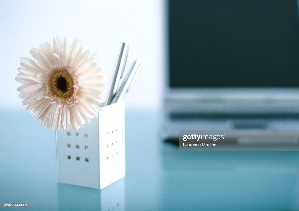 Flower in penholder : Stockfoto