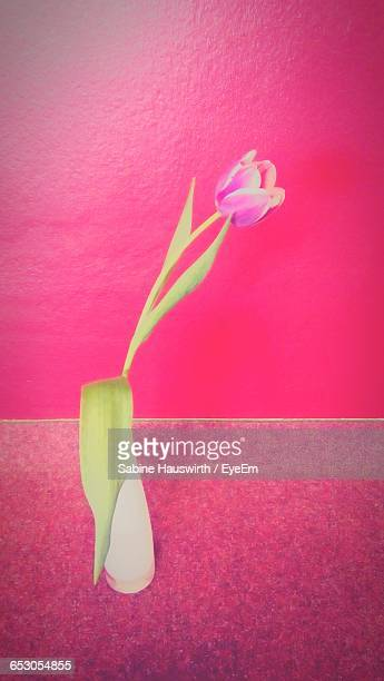 Flower In Vase Against Pink Wall