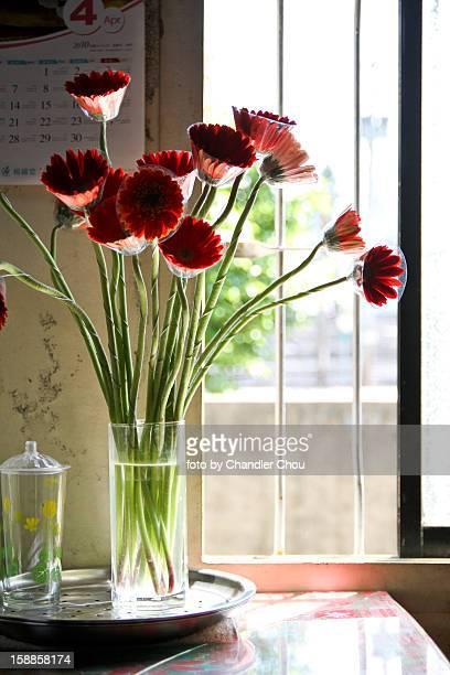 flower in window light