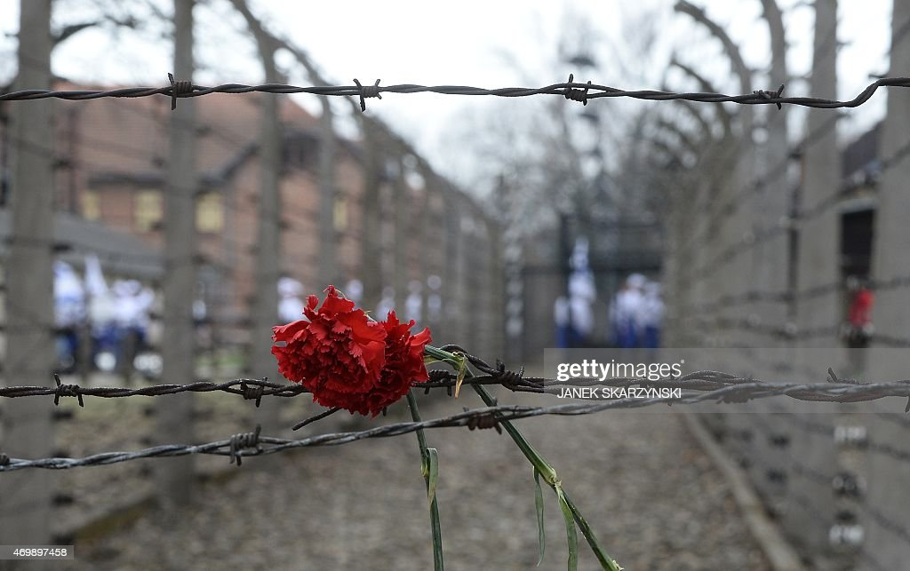 A flower is attached at a barbed wire fence at the former Nazi ...