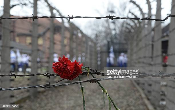 A flower is attached at a barbed wire fence at the former Nazi German AuschwitzBirkenau death camp during the 'March of the Living' at in Oswiecim...