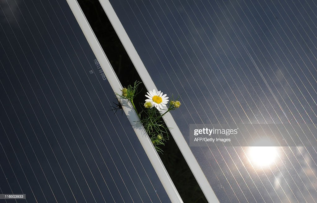 A flower is seen between two solar cell : News Photo