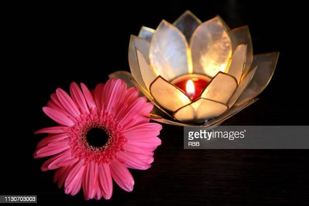 flower & lamp - pianta acquatica foto e immagini stock