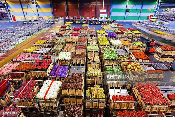 flower market of Aalsmeer