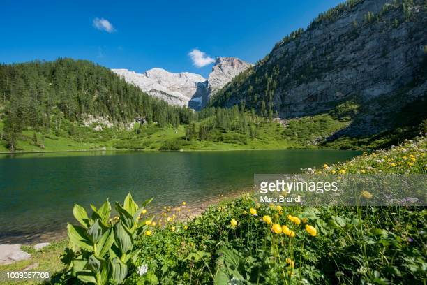Flower meadow at Lake Gruensee, hiking trail to the Kaerlinger Haus, Berchtesgaden National Park, Berchtesgadener Land, Upper Bavaria, Bavaria, Germany