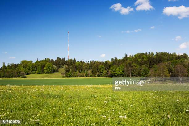 flower meadow in the forest with tall antenna - radio broadcasting stock pictures, royalty-free photos & images