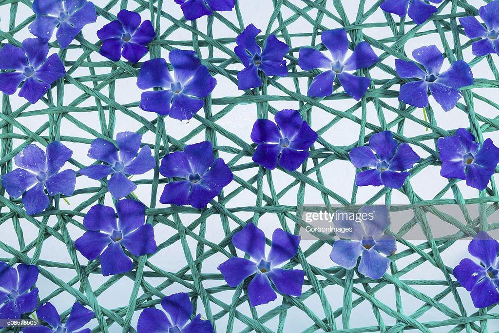 Flower Net : Stockfoto