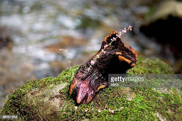 flower on a log - wabi sabi - fotografias e filmes do acervo