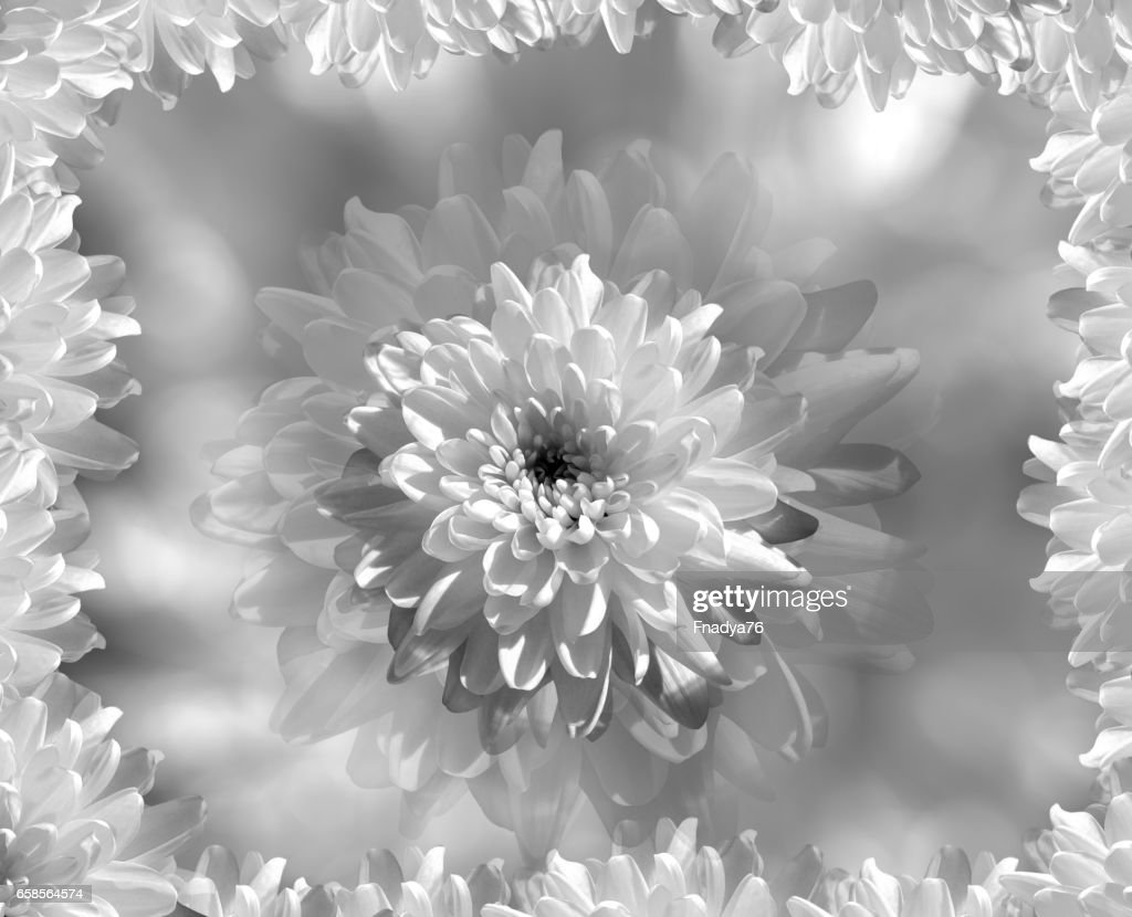 Flower On Blurry Graywhite Background Bokeh White Flowers