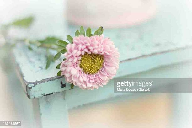 flower on chairs - laguna niguel stock pictures, royalty-free photos & images