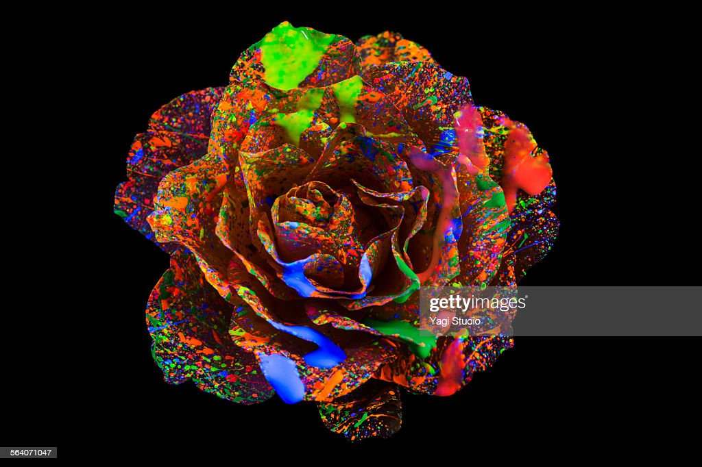 Lighting the roses in black light with Color ink