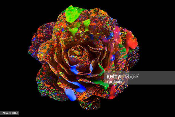 flower on color ink illuminating with black light - black rose stock pictures, royalty-free photos & images