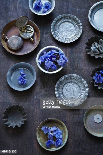 flower on plates - african violet stock photos and pictures