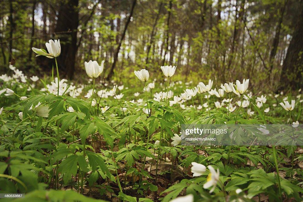 Blume auf der Lichtung. : Stock-Foto