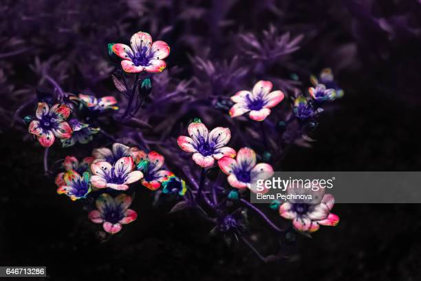 flower patterns - elena blume stock-fotos und bilder