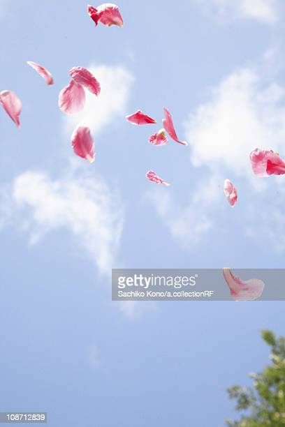 Flower petals in mid-air