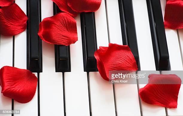 Flower petals on piano keys