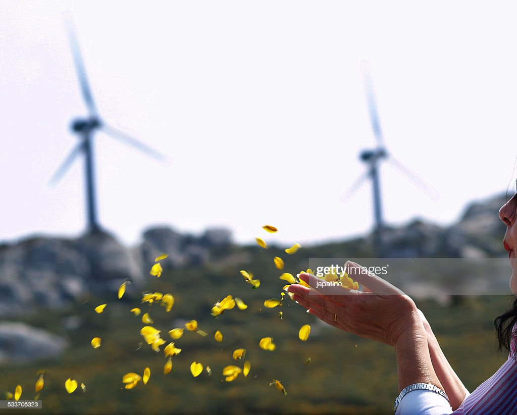 Flower petals : Foto stock
