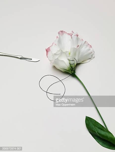 flower petals sewn together - medical stitches - fotografias e filmes do acervo