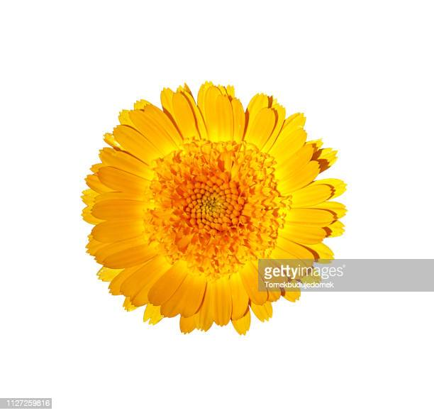flower - wachstum stock pictures, royalty-free photos & images