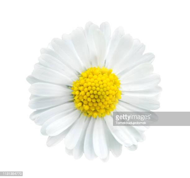 flower - flower head stock pictures, royalty-free photos & images