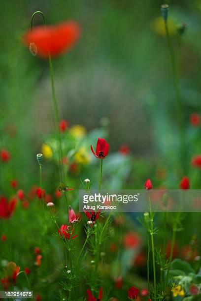 flower - altug karakoc - fotografias e filmes do acervo
