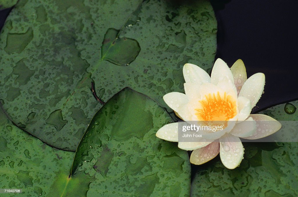flower : Bildbanksbilder