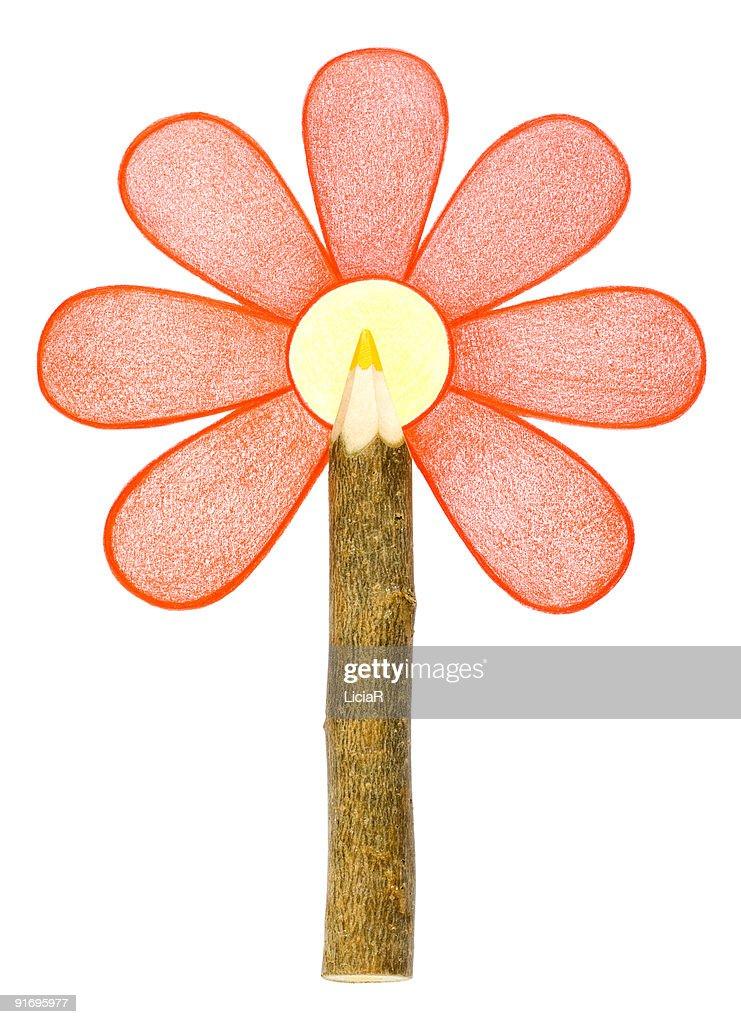 flower : Stock-Foto