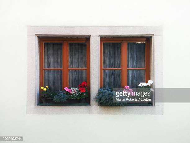 Flower Plants Against Window