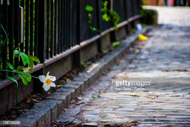 flower plants growing outdoors - coventry stock pictures, royalty-free photos & images