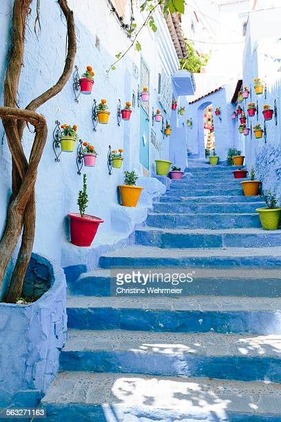 flower pot blue staircase in chefchaouen - christine wehrmeier stock pictures, royalty-free photos & images