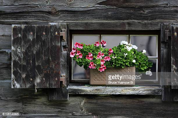 Flower pot decorating the window of a log house