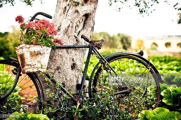 fleur pot sur vélo - les pouilles photos et images de collection