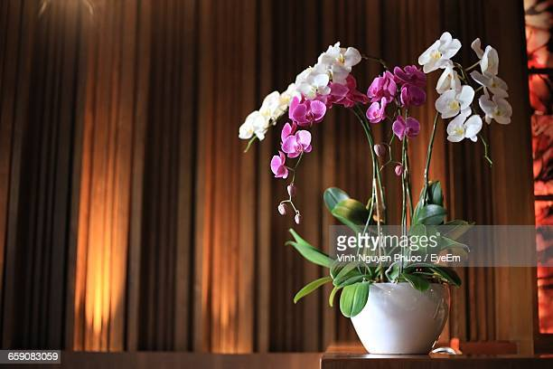 Flower Pot On Table At Home