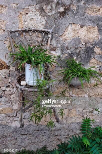 flower pot standing on a chair on the wall. - emreturanphoto fotografías e imágenes de stock