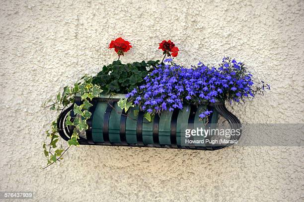 flower pot still life - howard pugh stock pictures, royalty-free photos & images