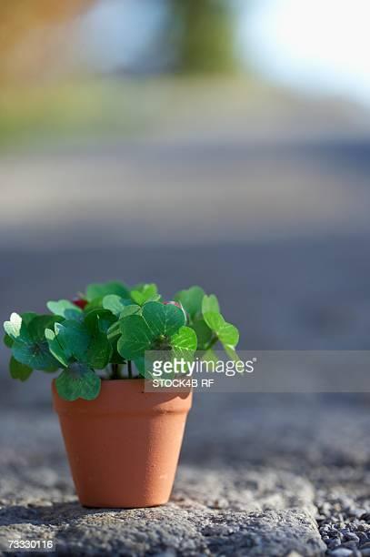 flower pot with clover, close-up, selective focus - 4 leaf clover stock-fotos und bilder