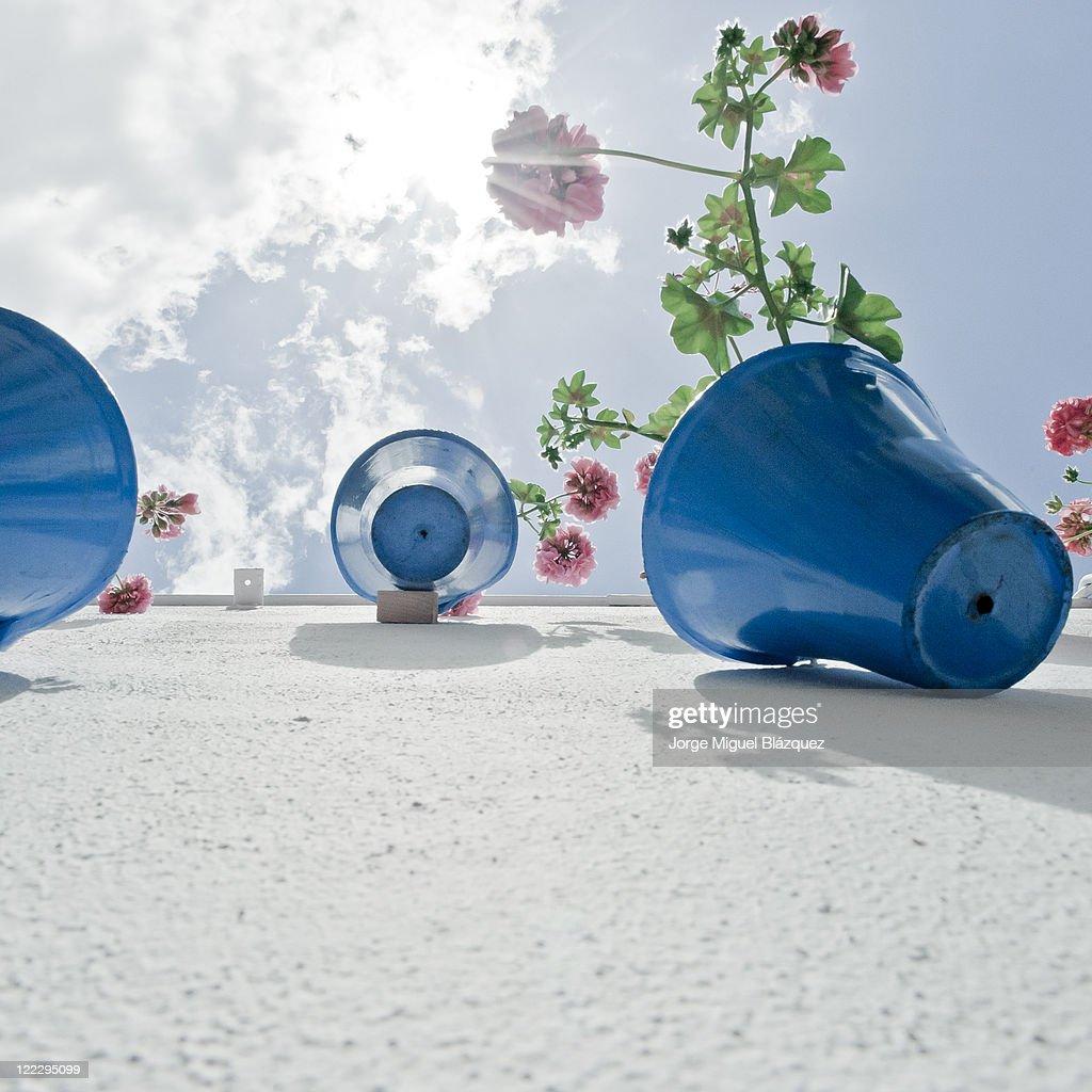 Flower pots at sun : Foto de stock