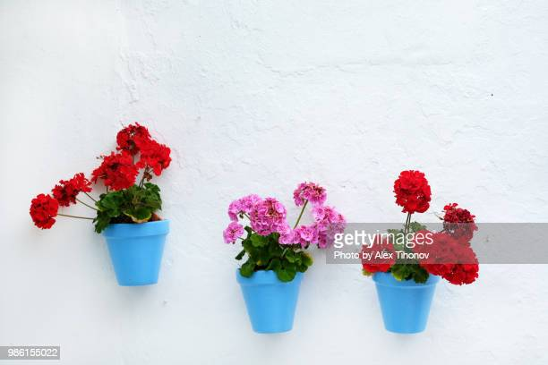 flower pots hanging on a whitewashed wall - hanging stock pictures, royalty-free photos & images