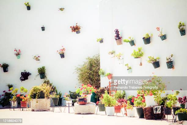 flower pots in an andalusian patio - andalucia fotografías e imágenes de stock