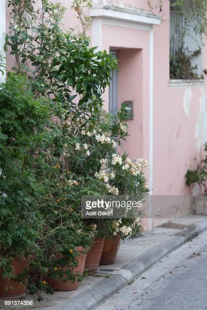 flower pots in Greece