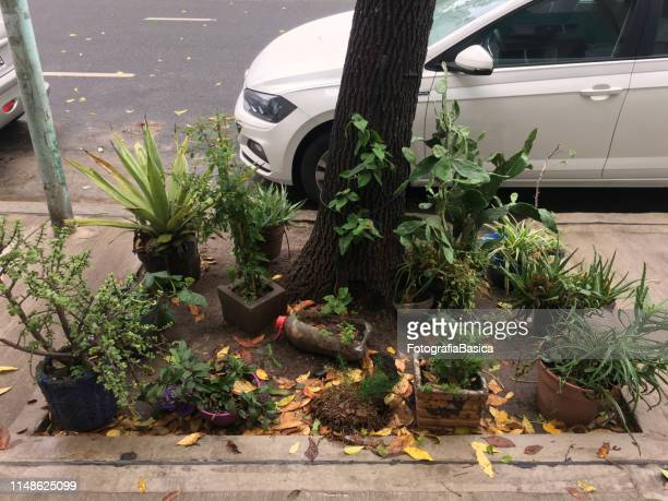 flower pots next to tree in the street - buenos aires stock pictures, royalty-free photos & images