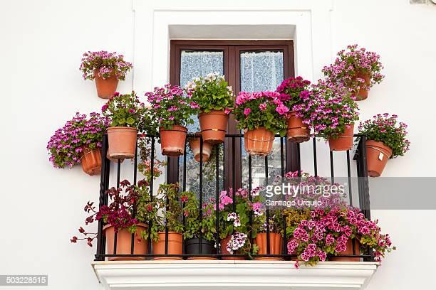 Flower pots on a window terrace