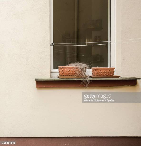 flower pots on closed window sill - albrecht schlotter stock photos and pictures