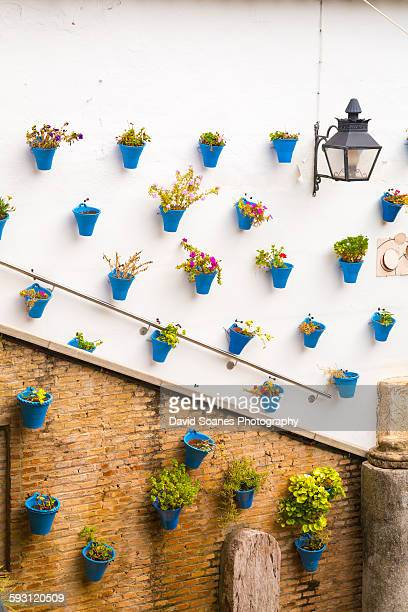 Flower pots on the walls