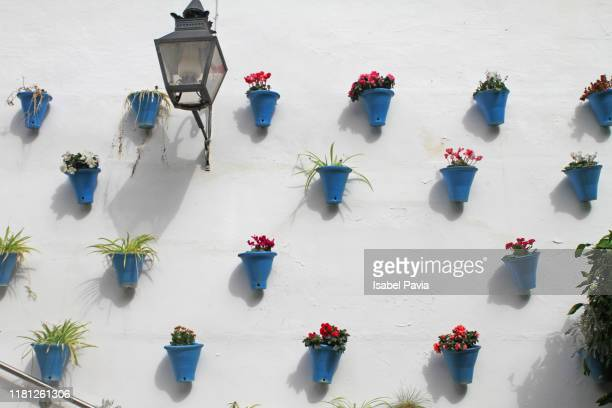 flower pots on white wall, cordoba, spain - andalucia fotografías e imágenes de stock