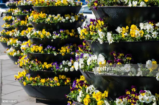 flower pots (close up) - lazy poland stock photos and pictures