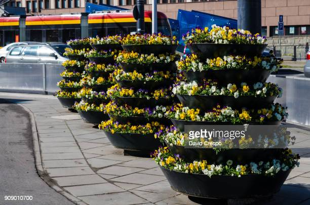 flower pots - lazy poland stock photos and pictures