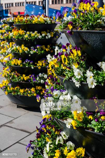 flower pots (vertical) - lazy poland stock photos and pictures