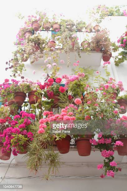 flower pots with geraniums on a balcony - geranium stock pictures, royalty-free photos & images